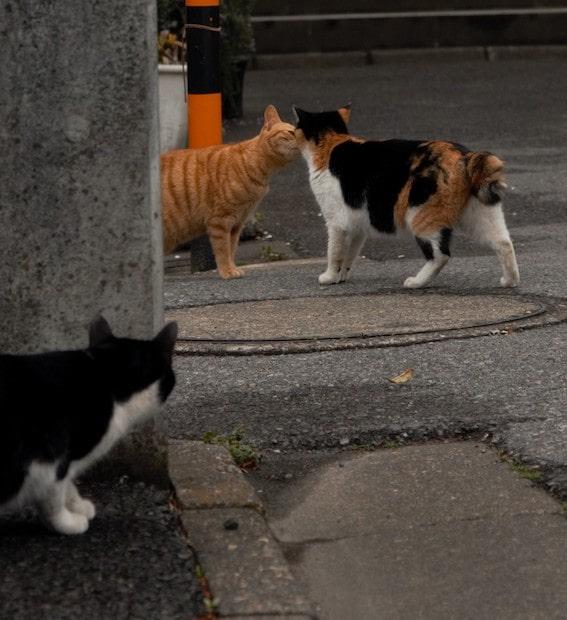 猫同士のキスシーンを目撃してしまった猫 by 残念すぎるネコ