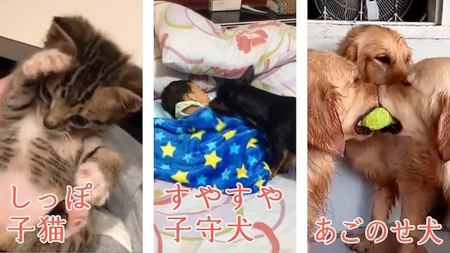 猫や犬の動画を視聴できる「ほっこりの山編」