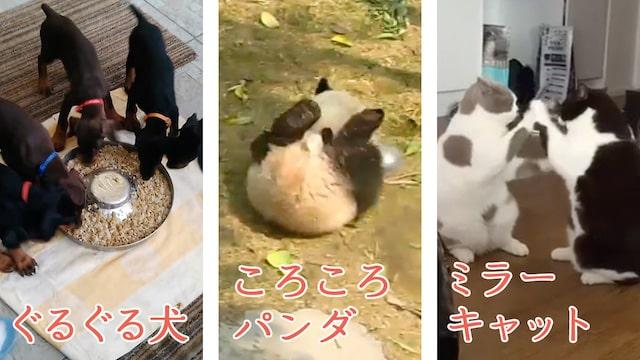 パンダや猫の動画を視聴できる「ほほ笑みの森編」
