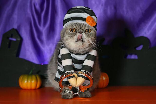 囚人にコスプレした猫スタッフ by 猫家 大宮店