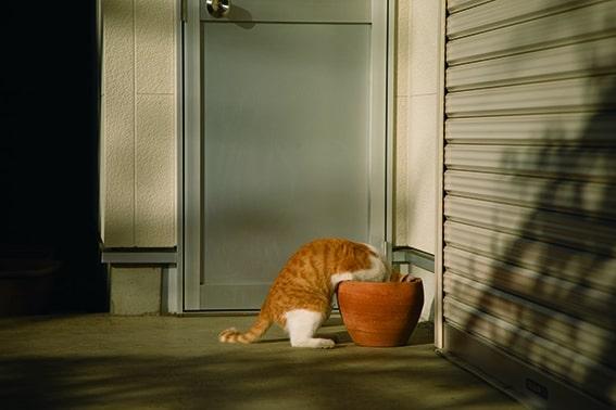 何かないか探している猫 by 残念すぎるネコ