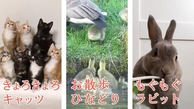 猫やうさぎの動画を視聴できる「げんきの丘編」