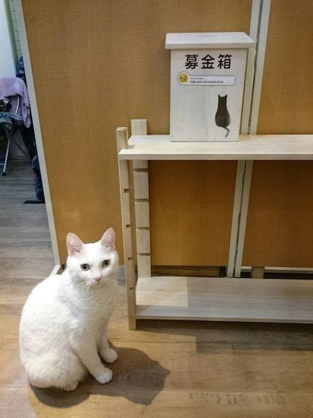 ギャラリー「アトリエコメット」の看板白猫
