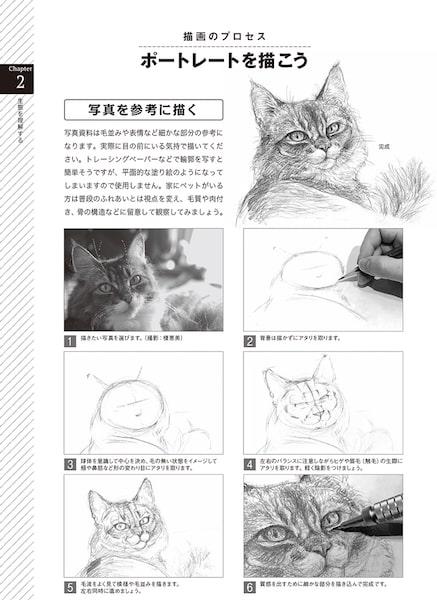 猫の描き方の解説ページ by 動物デッサンテクニック