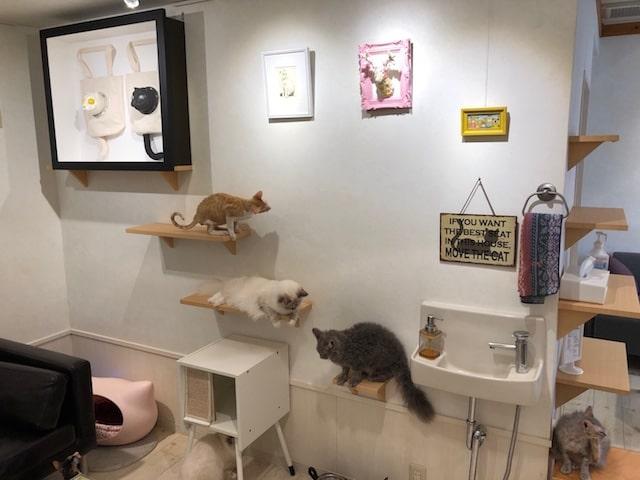 猫カフェ・カールアップカフェ(curl up cafe)の店内イメージ