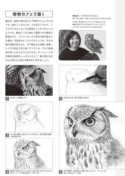 フクロウの描き方の解説ページ by 動物デッサンテクニック
