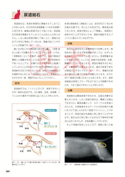 猫がかかりやすい病気についての解説 by 服部幸獣医師