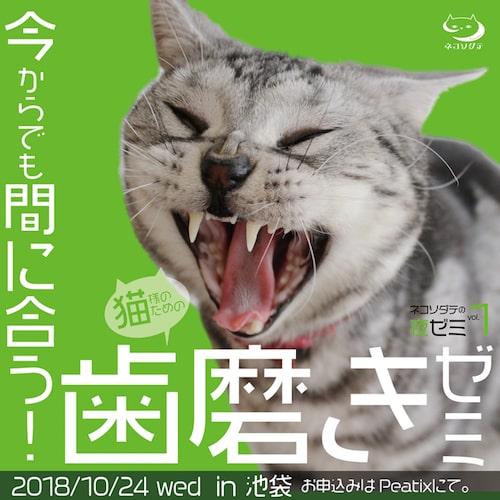 ネコソダテの講座「今からでも間に合う!猫様のための歯磨きゼミ」