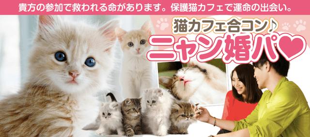 保護猫カフェ「まちねこ」で行う婚活イベント「にゃん婚パ」