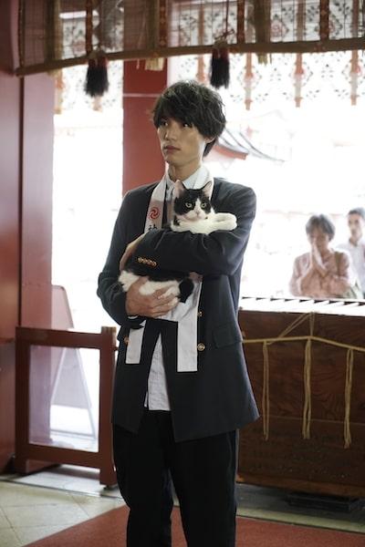 神田明神に旅猫リポートのヒット祈祷に訪れる福士蒼汰と猫のナナ