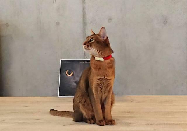 「Catlog(キャトログ)を装着した猫のイメージ