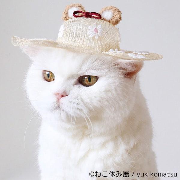 猫の優雅な帽子