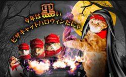 ピザハットが黒猫 or 黒い仮装をした愛猫の写真を募集中!猫用グッズが当たるニャ