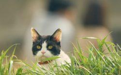 映画・旅猫リポートの主演猫「ナナ」のオフショット7枚が一挙に公開されたニャ
