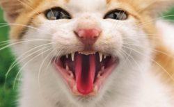 岩合光昭さんのダブル写真展「ネコライオン&ねこ科」