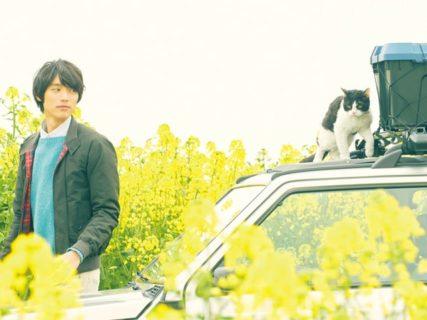 映画「旅猫リポート」の長編予告映像が公開、チャリティー試写会の参加者も募集中