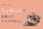 人気猫「なごむ」が風邪薬・改源のCMに出演決定、10/8から放送開始
