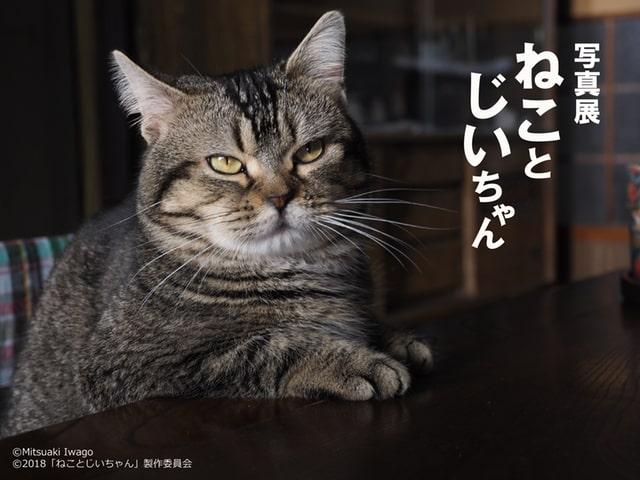岩合さんの監督映画「ねことじいちゃん」の写真展が開催!写真集もでるニャ