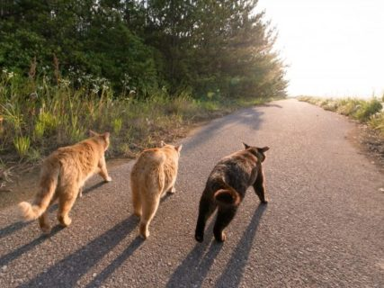 買わずに飼ってね!命拾いをして幸せになった犬猫たちの写真展が開催
