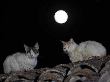 十五夜の月を背景に振り返る2匹の猫 by 岩合光昭