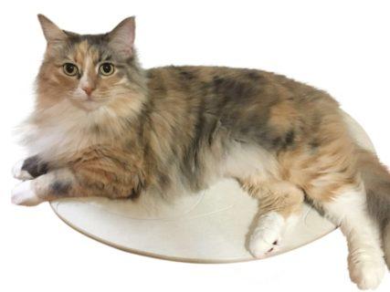 珪藻土マットで猫のお腹のムレを解消してくれる「猫・ネコろぶマット」