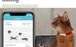 猫の活動データを24時間計測する、首輪型ウェアラブルデバイス「Catlog」
