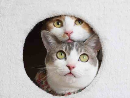 浦和パルコに「ねこ休み展」が初登場!来年の猫カレンダーや合格祈願グッズも