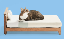ネコ家具が東京にやってくる!間近で見て触れる見本市が11/10〜開催