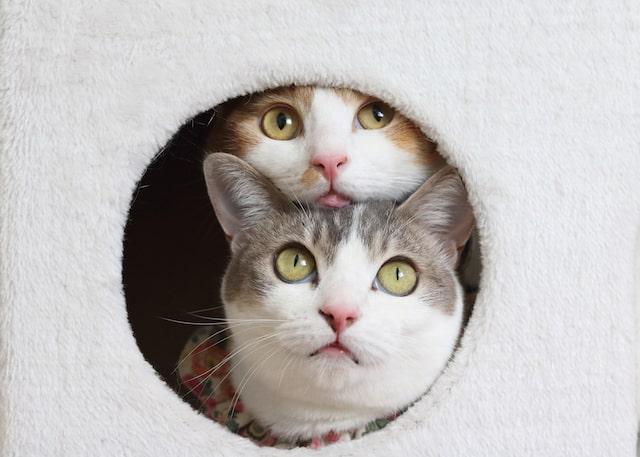穴から覗く2匹の猫 by Riepoyonn