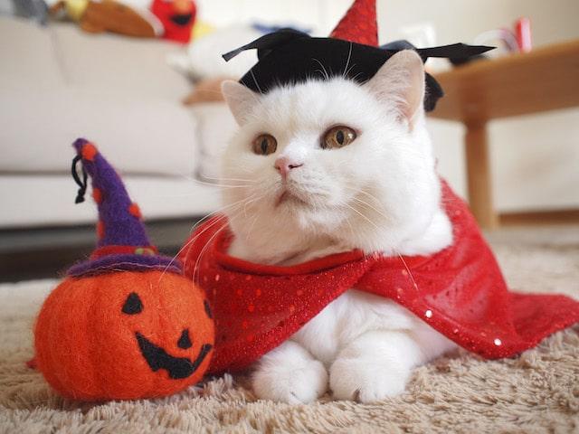 ハロウィンコスプレをする白猫 by JOE