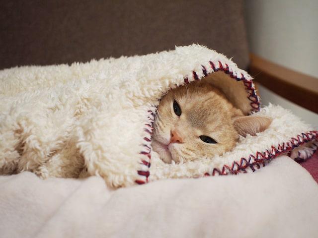 毛布にくるまれて眠そうな猫 by emi