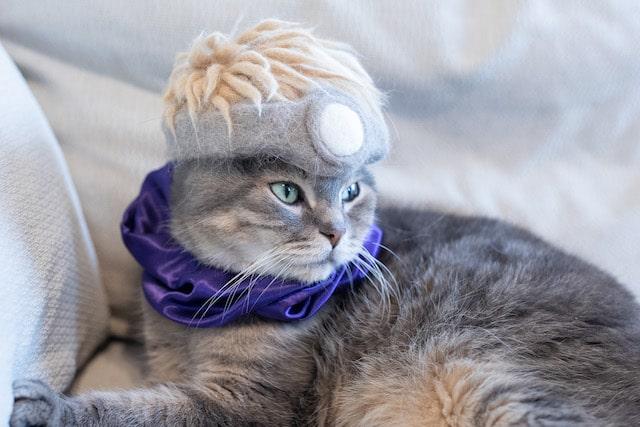 ドラクエの勇者風な猫の抜け毛で作った帽子をかぶる猫 by rojiman