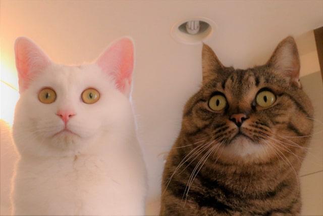 目を見開く2匹の猫 by 瀬戸にゃんちさ