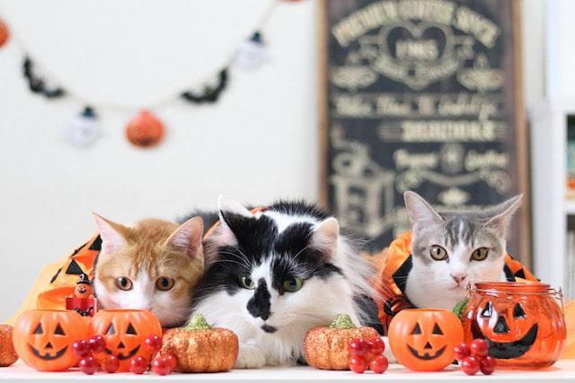 ハロウィン気分の猫たち by Riepoyonn
