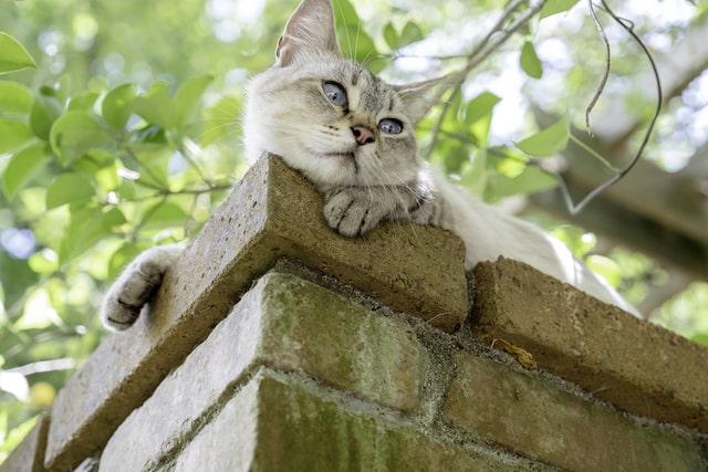塀の上でたたずむネコ by punkuma