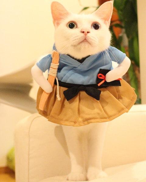 人間用のコスプレ服を着る猫 by Mai Yamamoto