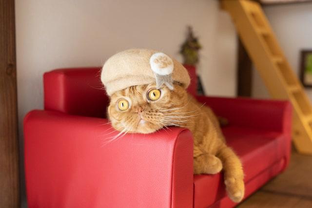 ソファの上で寝転び目を見開くネコ by rojiman