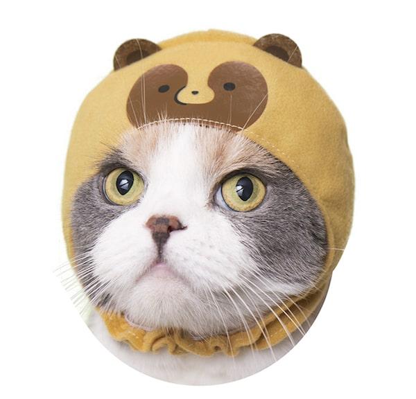 ふつうのタヌキ by かわいい猫のかぶりもの