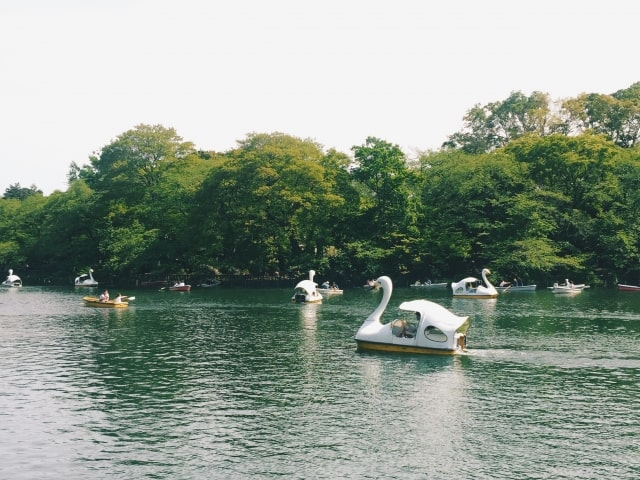 井の頭公園の「井の頭池」