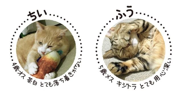 「クレイジーキャッツとマッドファミリー」に登場する猫、「ちい」と「ふう」