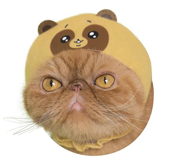 かわいいタヌキ by かわいい猫のかぶりもの
