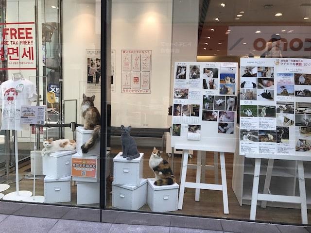 ユニクロ吉祥寺店の展示 by 吉祥寺ねこ祭り