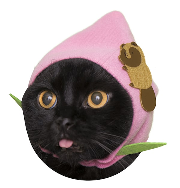 タヌキと桃 by かわいい猫のかぶりもの