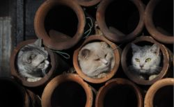 土管の中に入る猫たち by 写真展「ねことじいちゃん」
