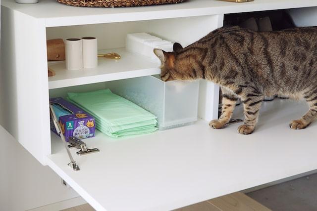 イタズラをする猫のイメージ by 猫がよろこぶ掃除・片づけ