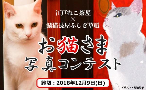 江戸ねこ茶屋×鯖猫長屋ふしぎ草紙 「お猫さま写真コンテスト」