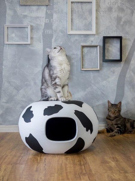 キャットハウス「猫かまくら mowmow」の外観イメージ