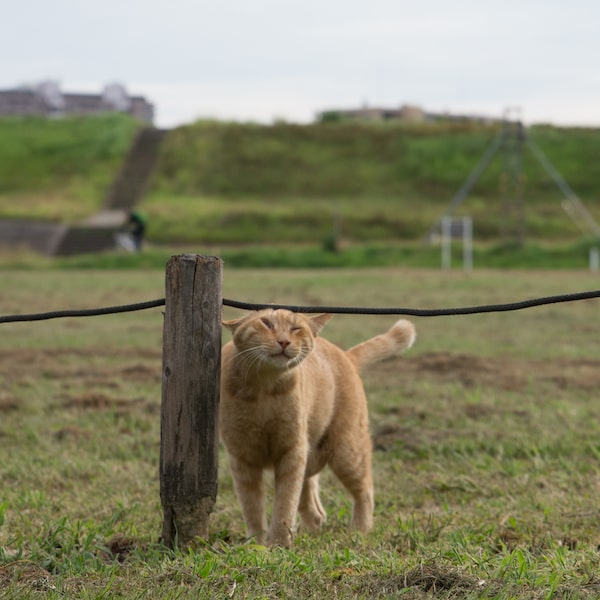 ロープに引っかかって目が釣り上がってしまった茶トラ猫 by 残念すぎるネコ