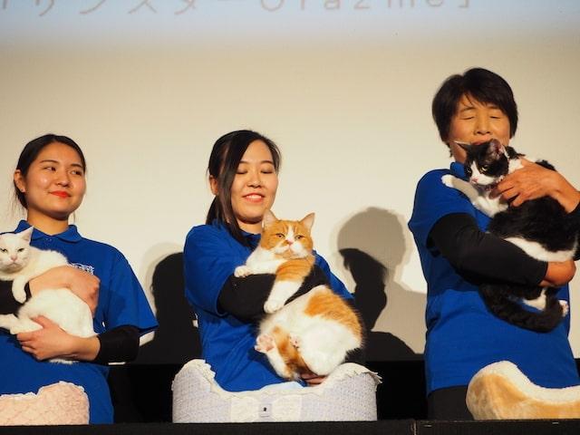 Y!mobileのふてニャンでお馴染みの猫・春馬
