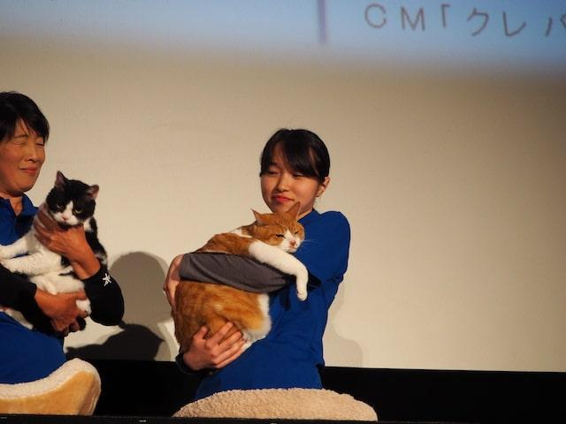 映画「猫忍(ねこにん)」で鮮烈なスクリーンデビューを果たした猫の金時
